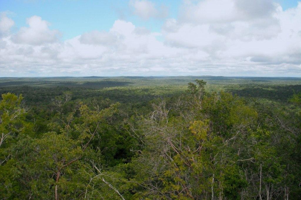 Peten Jungle Trekking To El Mirador In Guatemala