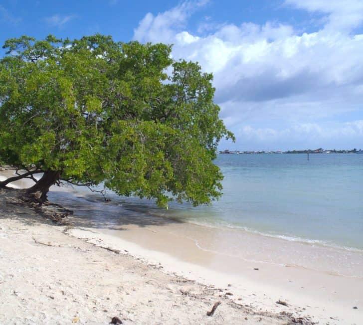 A Perfect Caribbean Island Called Utila