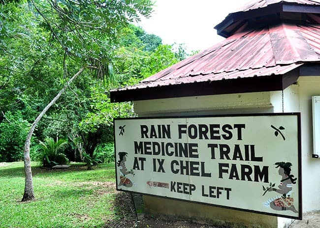 Rainforest Medicine Trail Things To Do In Belize