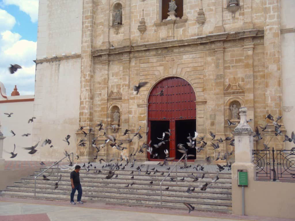 Church Birds