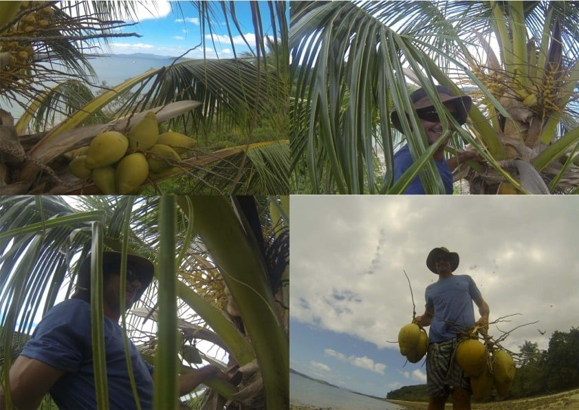 Collecting Some Tasty Coconuts. Sailing