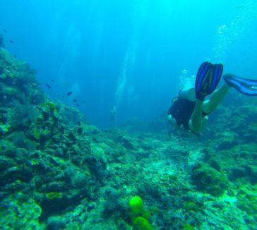 Scuba Diving NOMADasaurus Adventure Travel Blog
