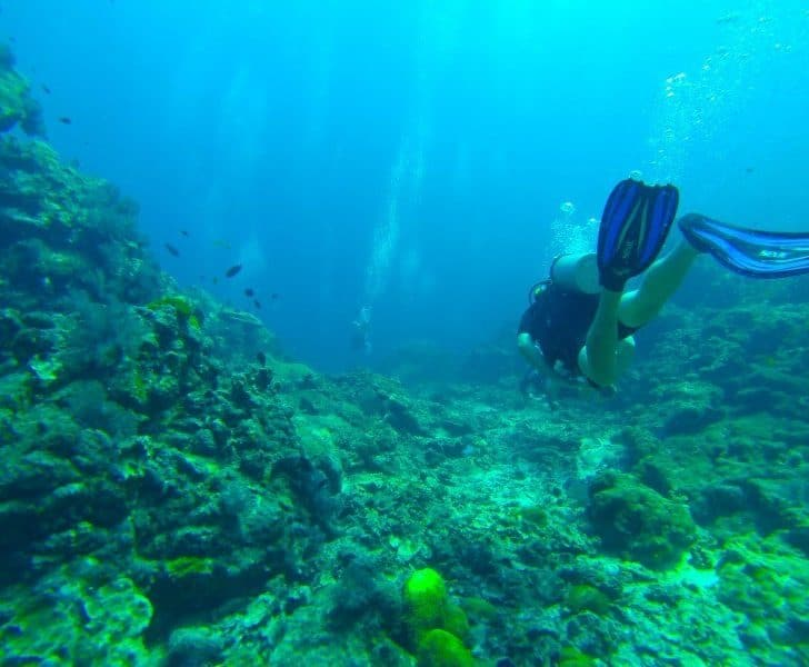 Diving To Explore The Mysterious World Underwater