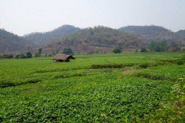 Green pastures just outside of the Hsipaw township. Hsipaw Trekking