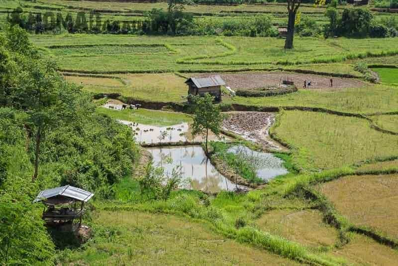 Terraced farmland. Laos motorcycle adventure