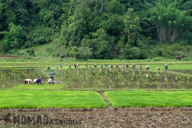 Farming outside of Phonsavan. Laos motorcycle adventure