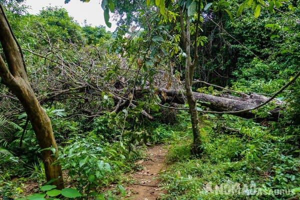 Nature Reserve Son Tra Peninsula What To Do In Da Nang Vietnam