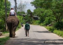 Why We Didn't Do An Elephant Tour In Sen Monorom