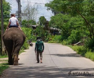 Elephant Tour Trek Sen Monorom Mondulkiri Cambodia Pai Thailand