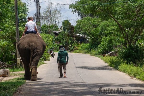Why We Didn't Do An Elephant Tour In Sen Monorom - NOMADasaurus Adventure Travel Blog
