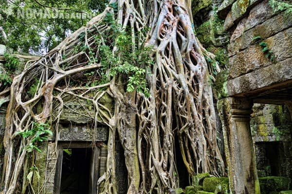 Ta Prohm Angkor Wat Three Days One Day Is Not Enough Cambodia Siem Reap