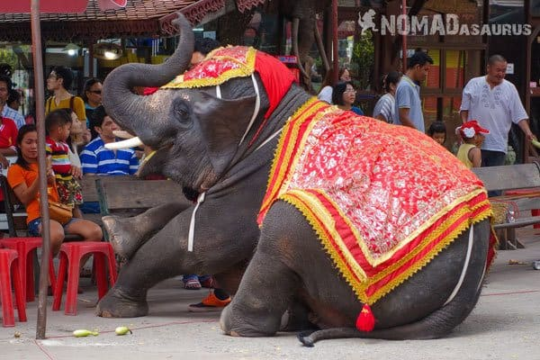 Elephant Tour Trek Sen Monorom Mondulkiri Cambodia Ayutthaya Thailand