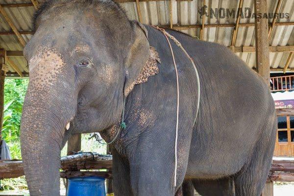 Elephant Tour Trek Sen Monorom Mondulkiri Cambodia Thoms Pai Thailand