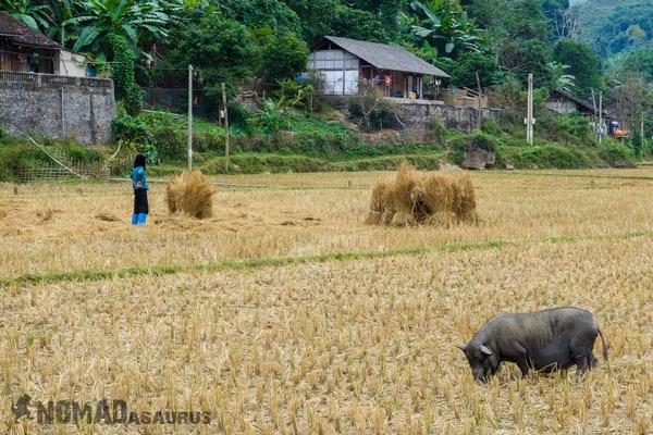 Thai Village Ba Be National Park Lake Mr Linhs Homestay Trekking