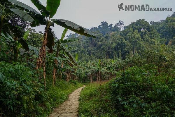 Clean Path Cuc Phuong National Park Waste Litter Trash