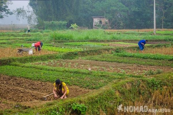 Farmers Morning Mai Chau Vietnam