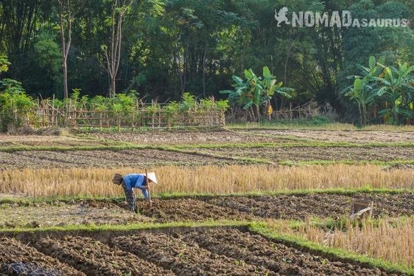 Lone Farmer Woman Mai Chau Vietnam