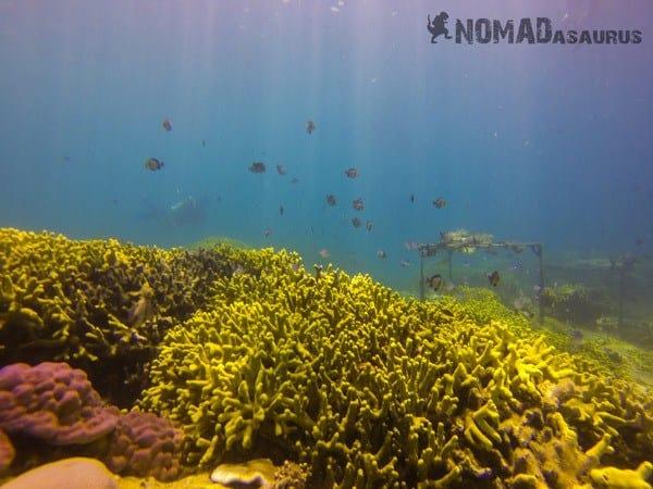 Scuba Diving In Nha Trang Vietnam
