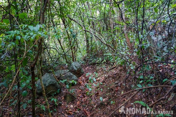 Jungle View Things To Do Phong Nha Hai's Eco Conservation Tour Vietnam