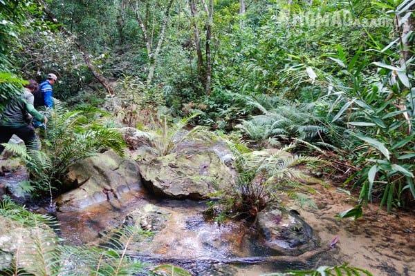 Trekking Things To Do Phong Nha Hai's Eco Conservation Tour Vietnam