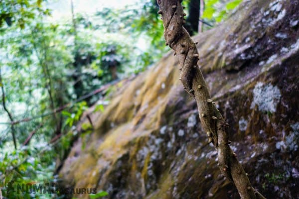Spiky Vine Things To Do Phong Nha Hai's Eco Conservation Tour Vietnam
