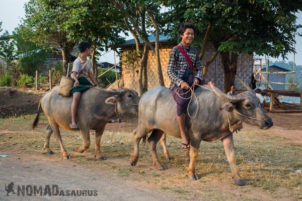 Boys Buffalo Farming Working Trekking From Kalaw To Inle Lake Myanmar Burma
