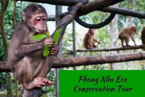 Back To Nature - Phong Nha's Eco Conservation Tour - NOMADasaurus Adventure Travel Blog