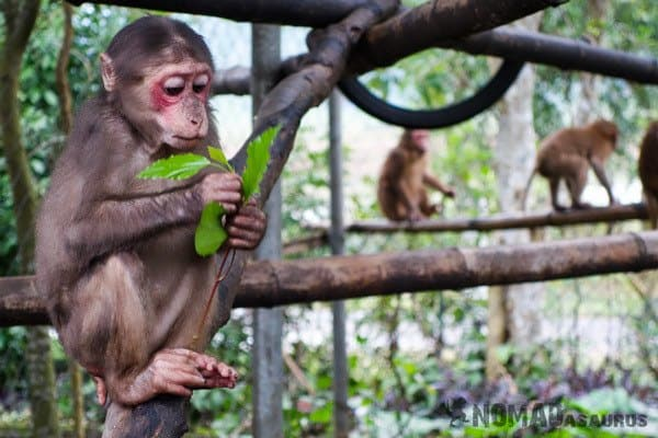 Monkey Things To Do Phong Nha Hai's Eco Conservation Tour Vietnam