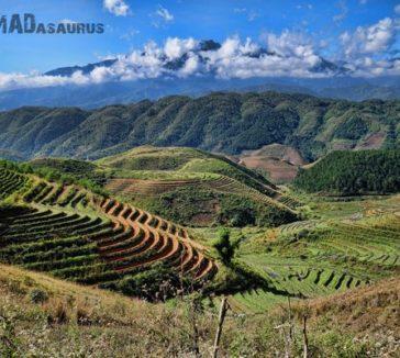 Rice Fields Photos Make You Travel To Vietnam
