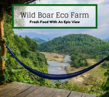 Wild Boar Eco Farm Phong Nha Vietnam