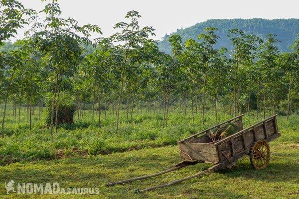 Cart Wild Boar Eco Farm Phong Nha Vietnam