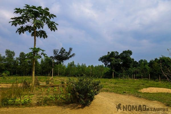 Spacious Property Wild Boar Eco Farm Phong Nha Vietnam