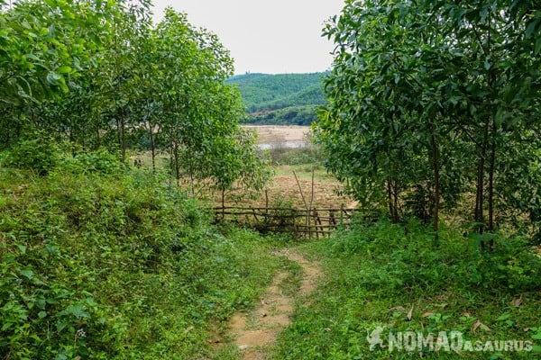 Treed Pathway Wild Boar Eco Farm Phong Nha Vietnam