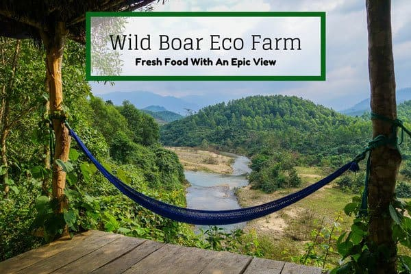 Fresh Food With A View – The Wild Boar Eco Farm