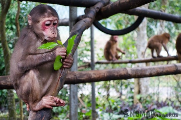 Macaque Life In Phong Nha Vietnam Images Pictures Photo Gallery