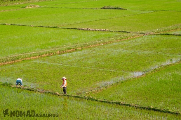 Rice Worked Life In Phong Nha Vietnam Images Pictures Photo Gallery