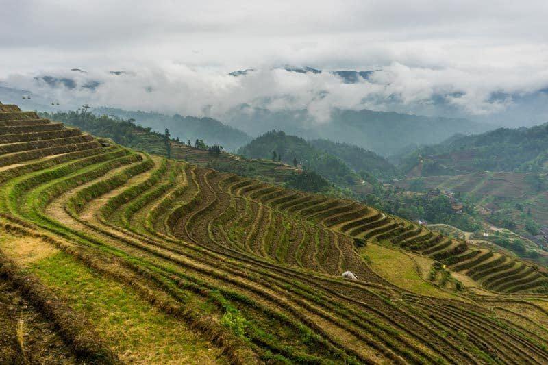 Longsheng Longji Rice Terraces Dragon's Backbone