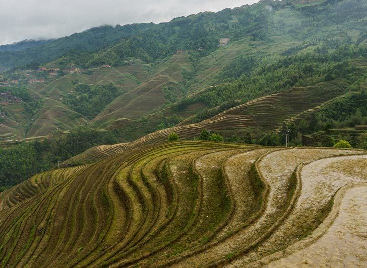 Hiking the Dragon's Backbone at Longji Rice Terraces