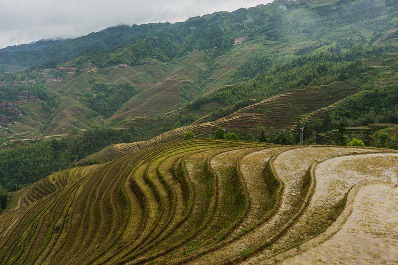 Longsheng Longji Rice Terraces Dragon'S Backbone Guangxi China