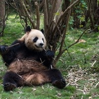 Best Things To Do With Three Days In Chengdu