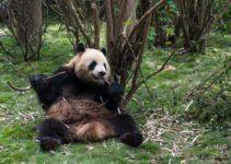 3 Days in Chengdu, China – The Perfect Itinerary