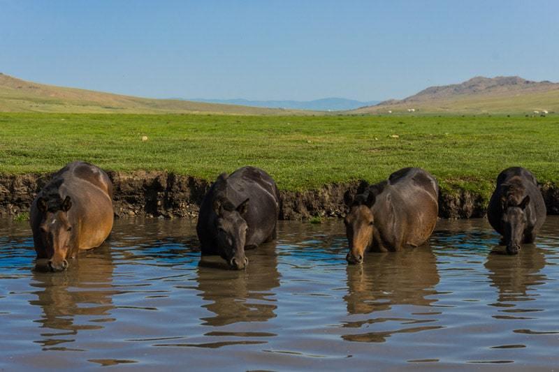 Horses River Nomadic Family Nomad Life Mongolia Selena Travel Gobi Desert Tour