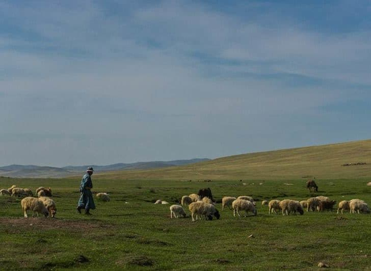 Life On The Steppe With A Mongolian Nomadic Family