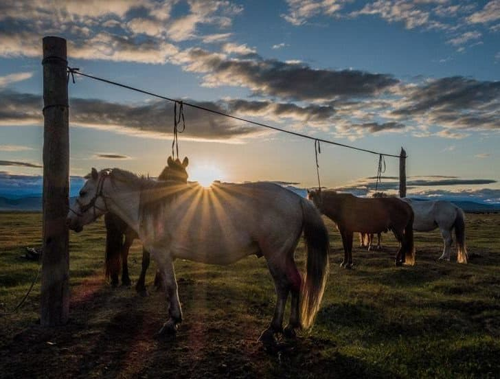 Changing Paths – Why We Didn't Buy Horses In Mongolia