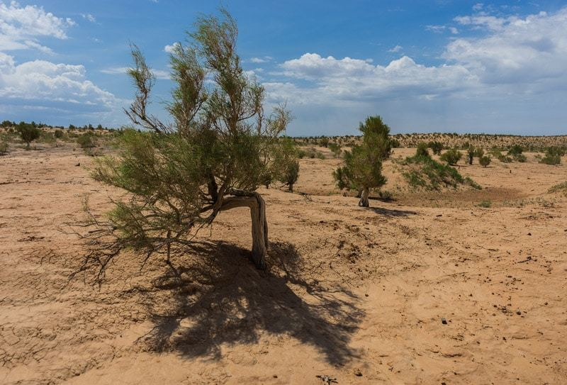 Saxaul Forest Gobi Desert Tour Mongolia Photo Journal Selena Travel