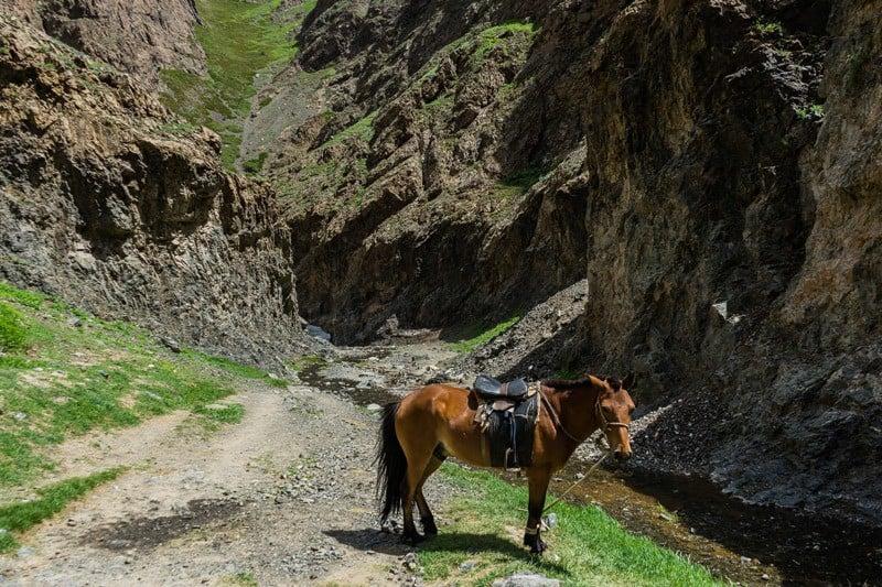 Horse Trekking Gobi Desert Tour Mongolia Photo Journal Selena Travel