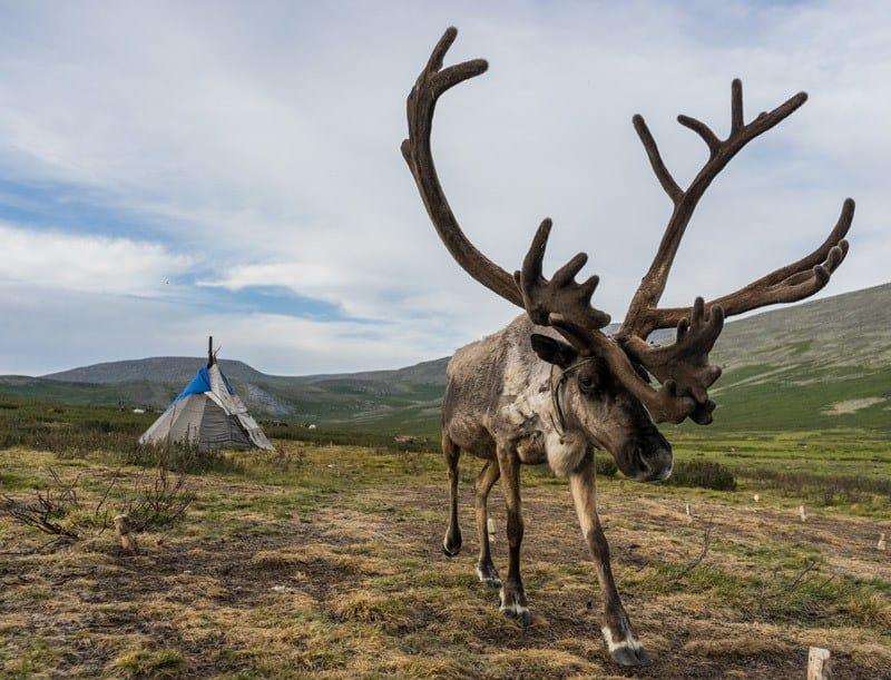 Tsaatan People Dukha Reindeer Herders Mongolia
