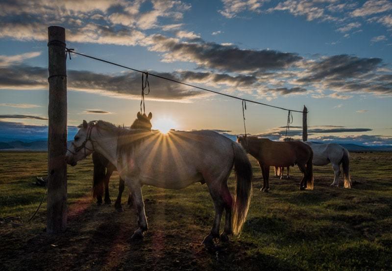 Horse Trek Sunset Tsaatan Dukha Reindeer Herders Mongolia