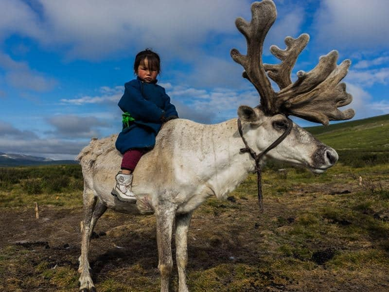 Young Girl Riding Tsaatan Dukha Reindeer Herders Mongolia