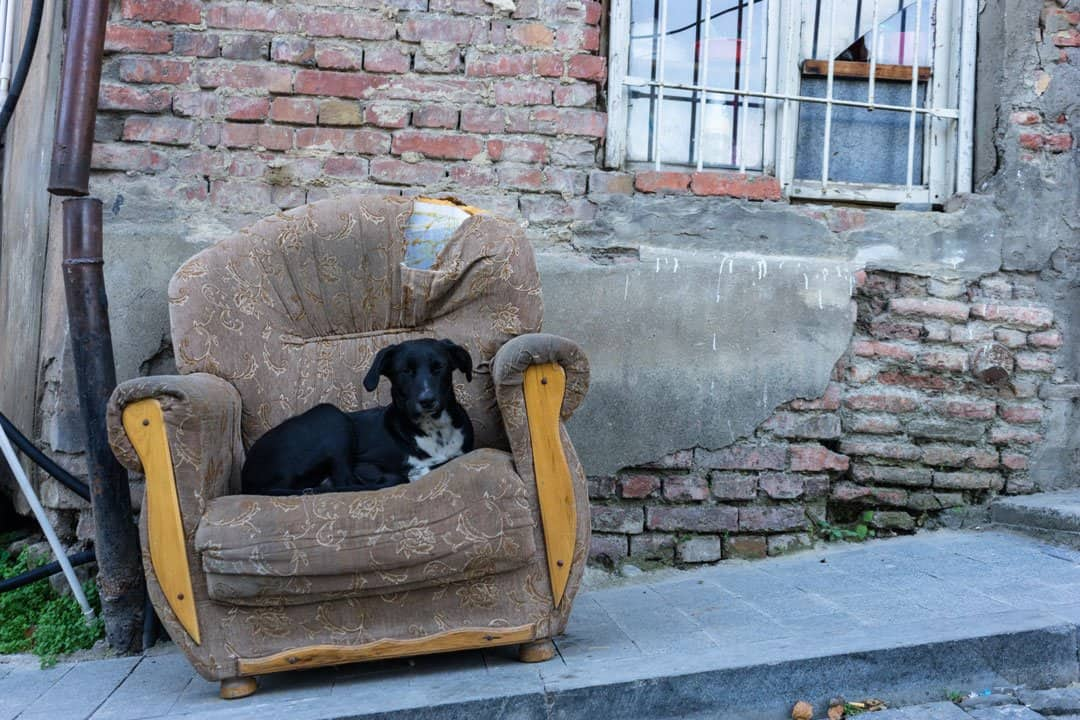 Dog Chair Street Photography In Tbilisi